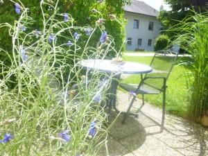 terrasse kornblume